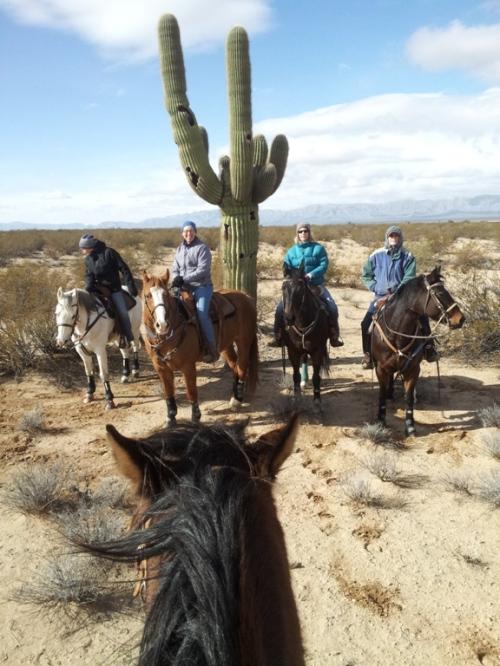 4 horseback riders and saguaro cactus