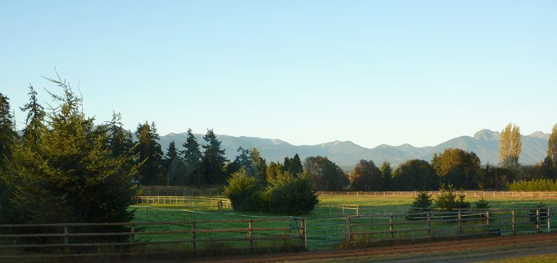 view of the Olympic Mountains from my studio windows